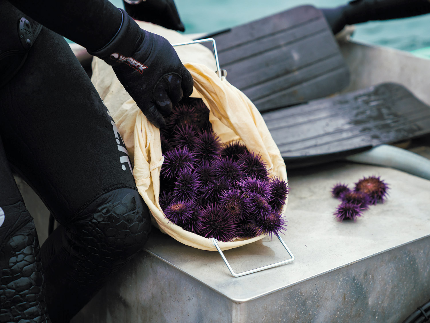 Urchin Explosion | Edible Marin & Wine Country