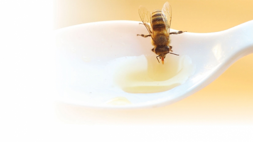 Bee dips into honey
