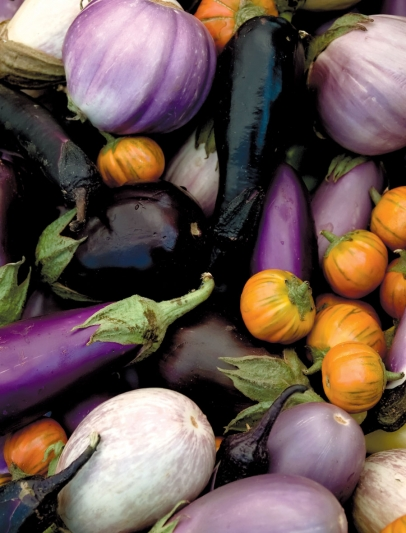 Eggplants in different colors and varieties
