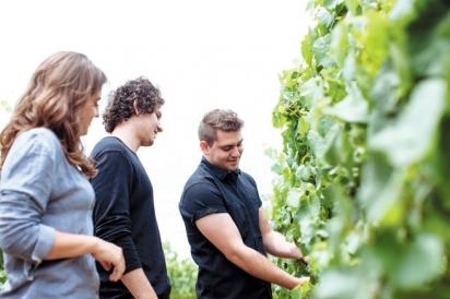 Looking at Vines
