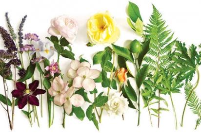 True Nature Botanicals