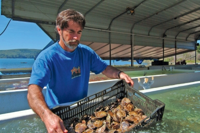 Terry Sawyer, co-owner of Hog Island Oyster Company