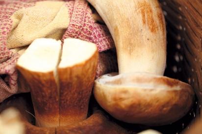 Mushroom foraged in Napa Valley