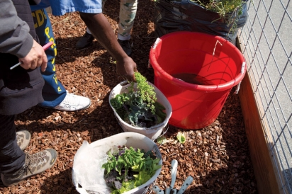 Insight Garden Program in San Quentin