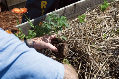 Planting at the garden in San Quentin