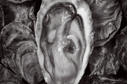 Drakes Bay Oyster