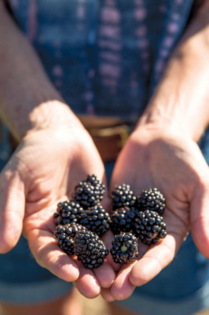 Blackberries grown on the farm