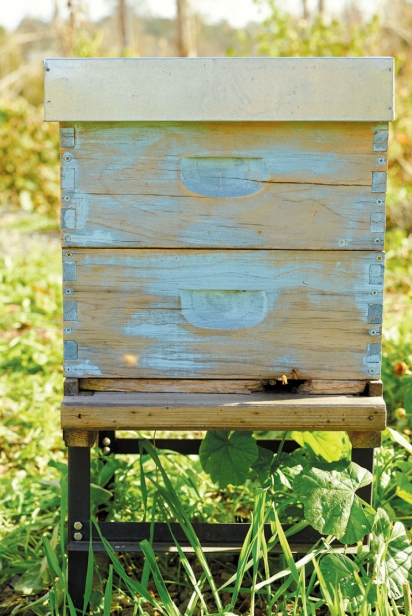 Beehive box commonly kept at vineyards
