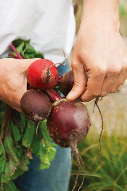 Beets harvested at The Croft