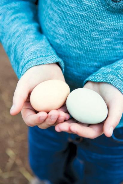 Farm fresh local eggs in hands