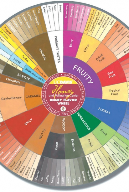 Honey Flavor Wheel