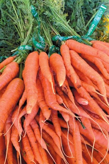 Organic carrots grown on the farm
