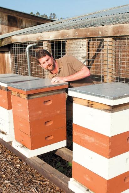Beekeeper Brad Alpert
