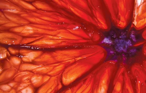 Inside of a blood orange