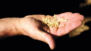 Wheat grains in hand